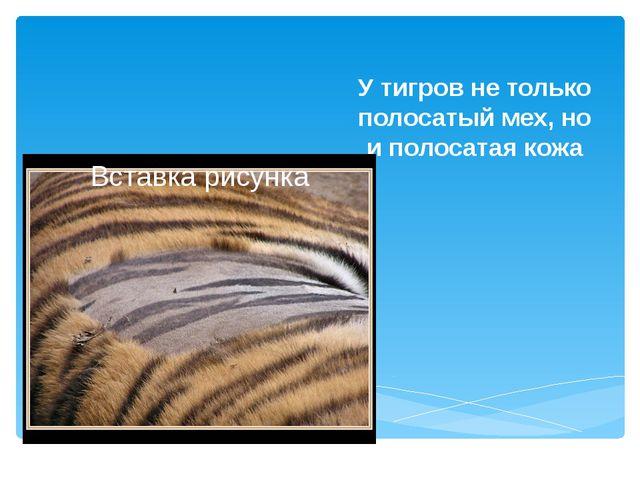 У тигров не только полосатый мех, но и полосатая кожа