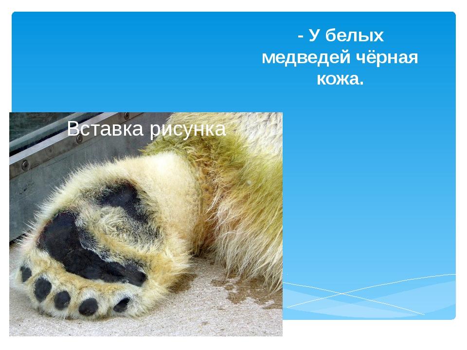 - У белых медведей чёрная кожа.