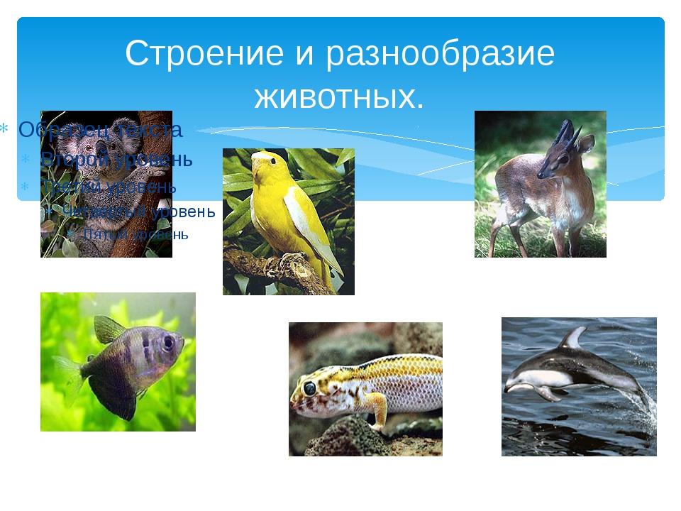 Строение и разнообразие животных.