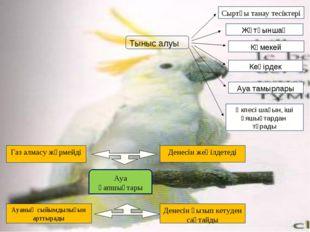 Тыныс алуы Сыртқы танау тесіктері Жұтқыншақ Көмекей Кеңірдек Ауа тамырлары Өк