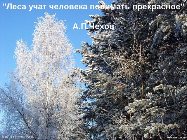 """""""Леса учат человека понимать прекрасное"""" А.П.Чехов"""