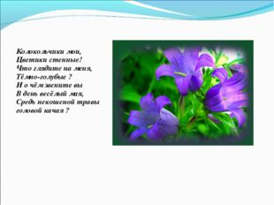 Колокольчики мои, Цветики степные! Что глядите на меня, Тёмно-голубые ? И о ч