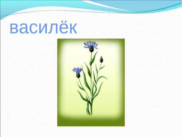 василёк