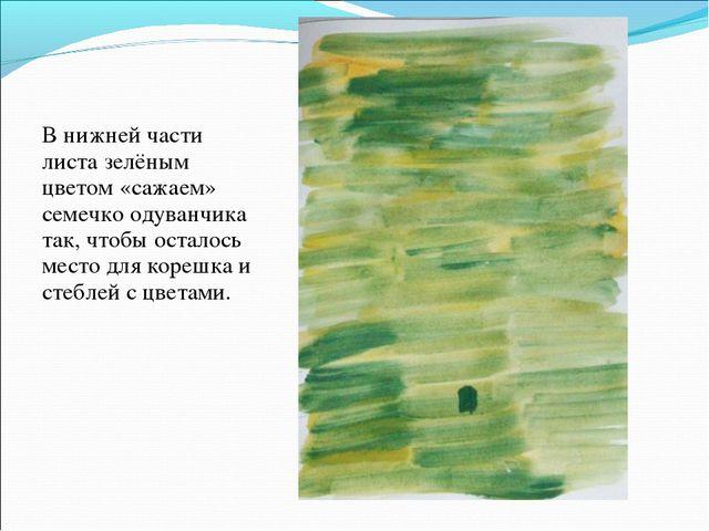 В нижней части листа зелёным цветом «сажаем» семечко одуванчика так, чтобы ос...
