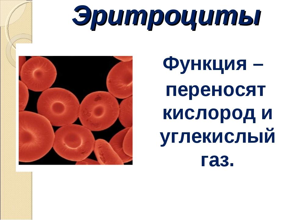 Эритроциты Функция – переносят кислород и углекислый газ.