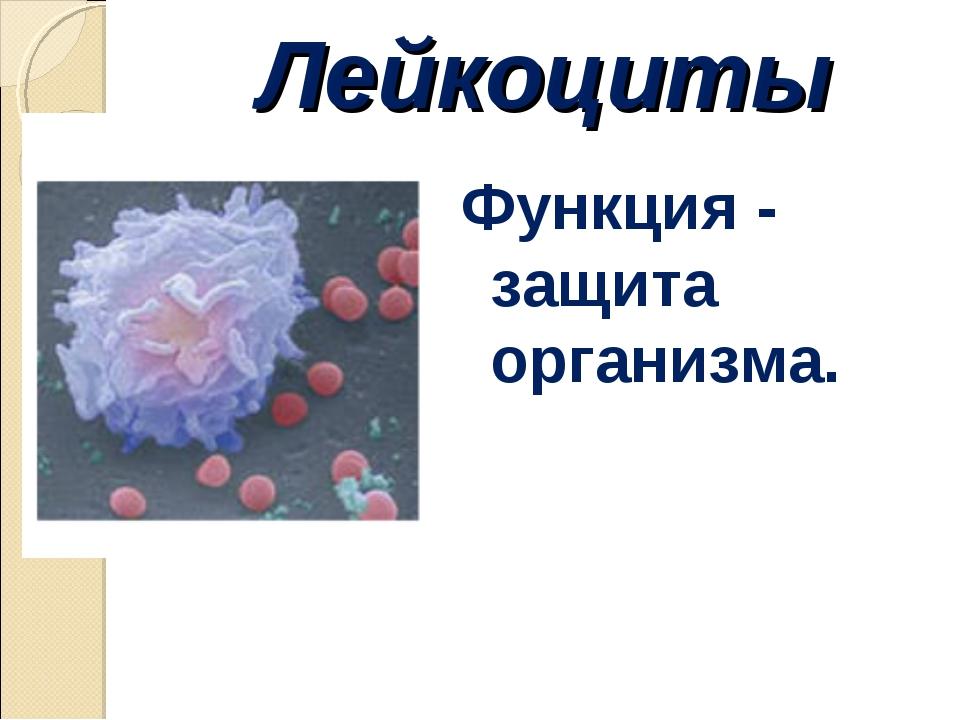 Лейкоциты Функция - защита организма.