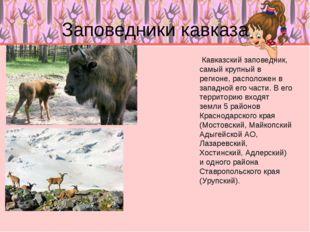 Заповедники кавказа Кавказский заповедник, самый крупный в регионе, располож