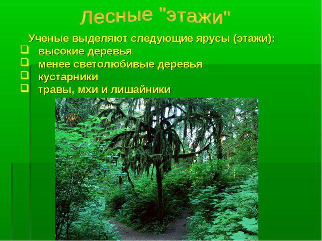 Ученые выделяют следующие ярусы (этажи): высокие деревья менее светолюбивые...