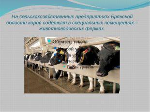 На сельскохозяйственных предприятиях Брянской области коров содержат в специа