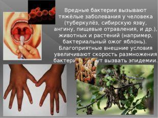 Вредные бактерии вызывают тяжёлые заболевания у человека (туберкулёз, сибирс