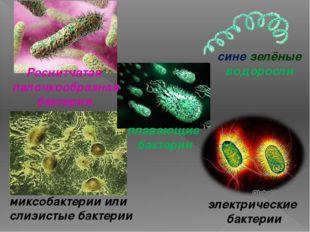 миксобактерии или слизистые бактерии электрические бактерии плавающие бактери