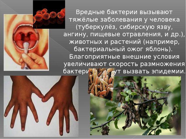 Вредные бактерии вызывают тяжёлые заболевания у человека (туберкулёз, сибирс...