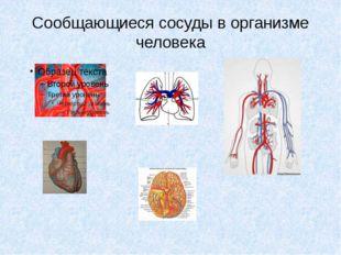 Сообщающиеся сосуды в организме человека