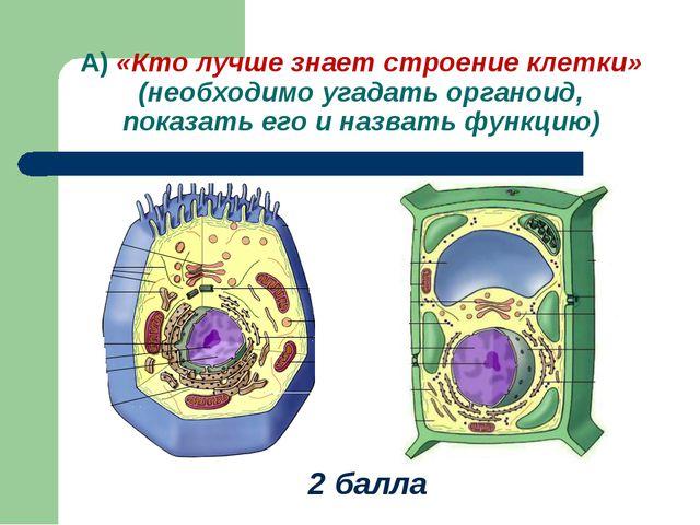 А) «Кто лучше знает строение клетки» (необходимо угадать органоид, показать е...
