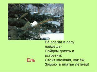 Ель Её всегда в лесу найдешь- Пойдем гулять и встретим: Стоит колючая, как ёж
