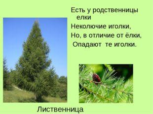 Есть у родственницы елки Неколючие иголки, Но, в отличие от ёлки, Опадают те