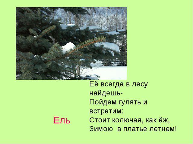 Ель Её всегда в лесу найдешь- Пойдем гулять и встретим: Стоит колючая, как ёж...