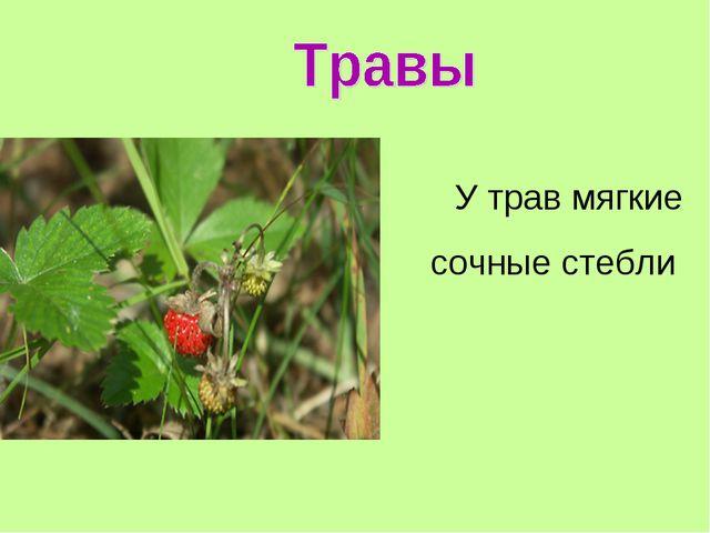 У трав мягкие сочные стебли