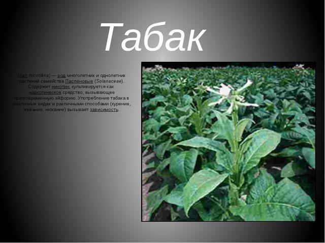 Табак (лат.Nicotiána)—родмноголетних и однолетних растений семействаПасл...