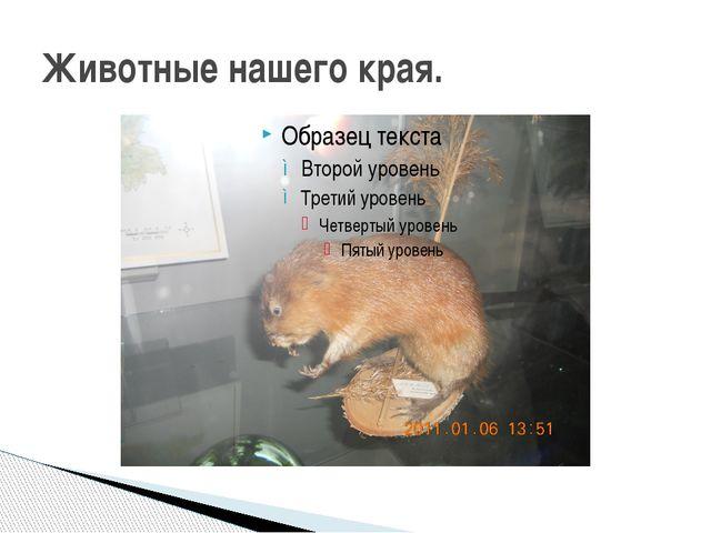 Животные нашего края.