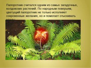 Папоротник считался одним изсамых загадочных, колдовских растений. По народн