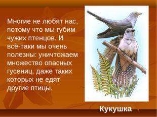 Кукушка Многие не любят нас, потому что мы губим чужих птенцов. И всё-таки мы