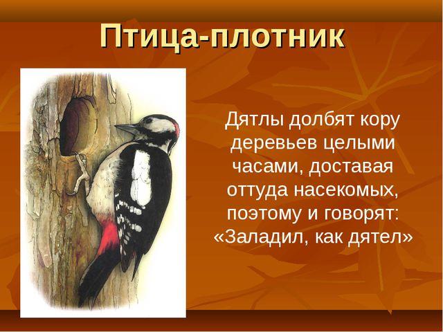 Птица-плотник Дятлы долбят кору деревьев целыми часами, доставая оттуда насек...