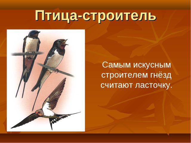 Птица-строитель Самым искусным строителем гнёзд считают ласточку.