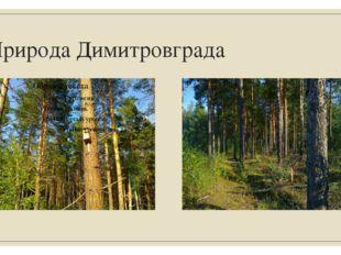 Природа Димитровграда