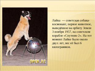 Лайка — советская собака-космонавт, первое животное, выведённое на орбиту Зем
