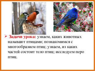 Задачи урока: узнаем, каких животных называют птицами; познакомимся с многоо
