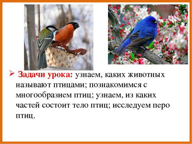 Задачи урока: узнаем, каких животных называют птицами; познакомимся с многоо...