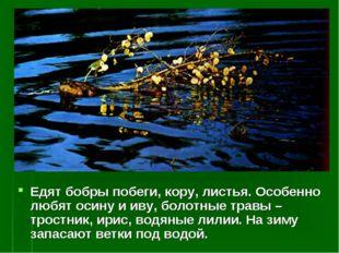 Едят бобры побеги, кору, листья. Особенно любят осину и иву, болотные травы –