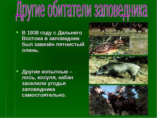 В 1938 году с Дальнего Востока в заповедник был завезён пятнистый олень. Друг...