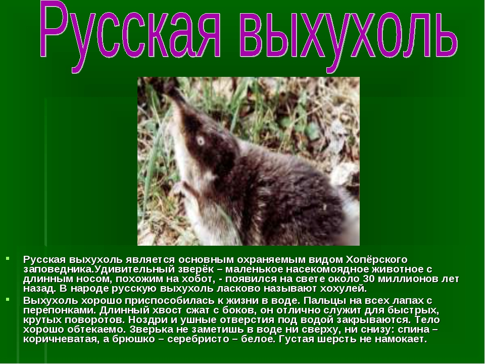 Русская выхухоль является основным охраняемым видом Хопёрского заповедника.Уд...