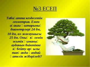№3 ЕСЕП Табиғатта кездесетін геометрия. Емен ағашы ұштарының диаметрлері 24 д