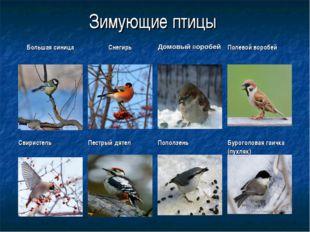 Зимующие птицы Большая синицаСнегирьДомовый воробейПолевой воробей Свирист