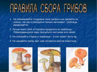 Не обламывайте плодовые тела грибов и не срезайте их ножом, так как остающиес