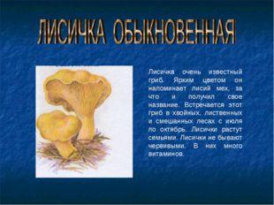 Лисичка очень известный гриб. Ярким цветом он напоминает лисий мех, за что и