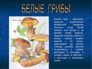 Белый гриб – красивый, вкусный, изумительно ароматный. Название получил из-за