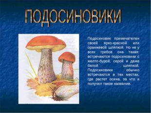 Подосиновик примечателен своей ярко-красной или оранжевой шляпкой. Но не у вс