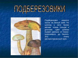 Подберезовик немного похож на белый гриб. Но шляпка у него более мягкая, ножк