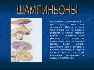 Шампиньон обыкновенный – гриб белого цвета или сероватый. Мякоть у него тоже