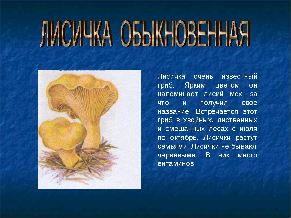 Лисичка очень известный гриб. Ярким цветом он напоминает лисий мех, за что и...
