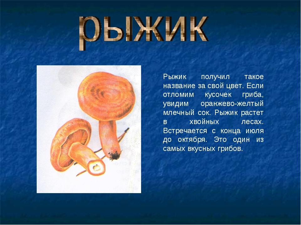 Рыжик получил такое название за свой цвет. Если отломим кусочек гриба, увидим...