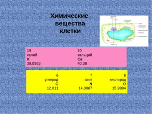 Химические вещества клетки 6 углерод C 12,011 7 азот N 14,0067 8 кислород O 1