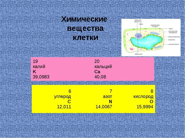Химические вещества клетки 6 углерод C 12,011 7 азот N 14,0067 8 кислород O 1...