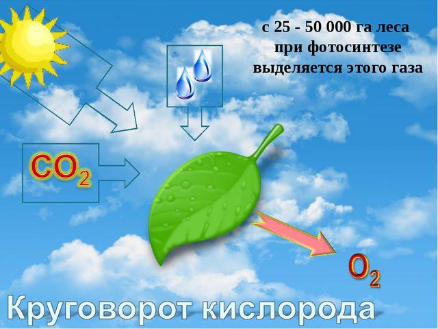 с 25 - 50 000 га леса при фотосинтезе выделяется этого газа