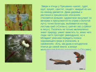 Звери и птицы у Пришвина «шипят, гудят, орут, кукуют, свистят, пищат»; кажды