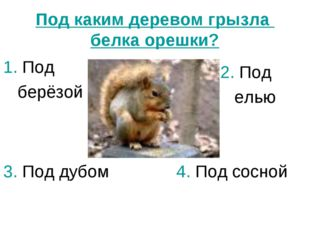 Под каким деревом грызла белка орешки? 1. Под берёзой 2. Под елью 3. Под дубо